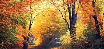 santé automne