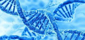 meditation genes