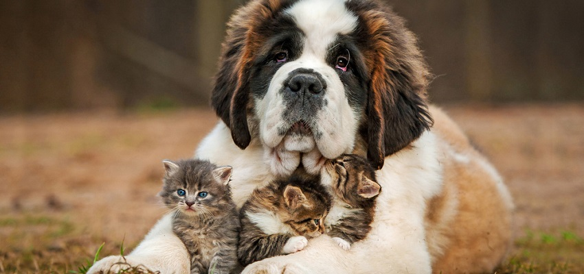 vivre avec un animal de compagnie